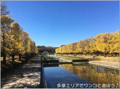 昭和記念公園イチョウ並木