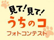笑顔にキュン「見て!見て!うちのコ」ペットフォトコンテスト2019入賞作品