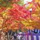 鮮やかな秋の景色を探しに