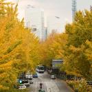秋だけの横浜を見に出かけませんか?