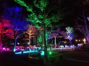 冬はライトアップを楽しむ☆「愛媛県立とべ動物園」の園内イルミネーション