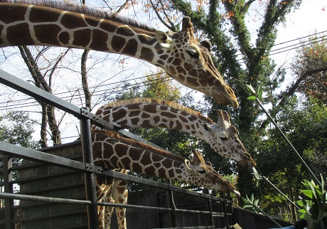 大人300円でここまで楽しめる!40周年を迎えた「羽村市動物公園」