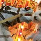 愛犬も一緒に♡ドイツ・クリスマスマーケット大阪2018🎄