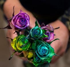 クロモリのバラ