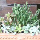 植物好き必見!グリーンルームで癒されませんか@柏の葉キャンパス
