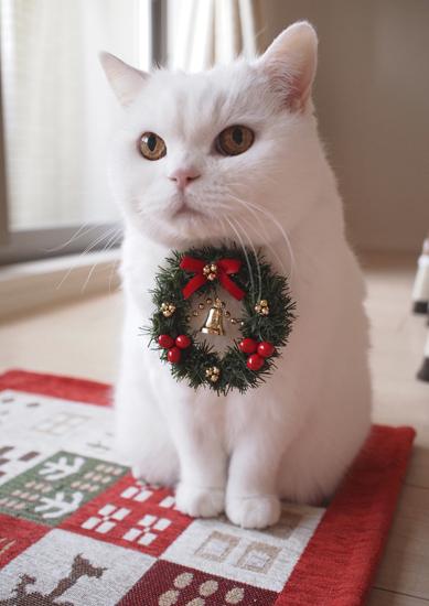 かわいい猫の作品が400点以上!「ねこ休み展 in 横浜みなとみらい」開催