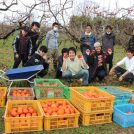 和光大学生が地域連携 農作業体験が新鮮で楽しい!