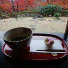 抹茶がいただける茶室がある県立秦野戸川公園 紅葉終盤、夜は吊り橋ライトアップ