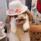 【鹿児島市西田】子どもも大喜び!うさぎと触れ合い、癒しの時間を過ごせるお店「うさカフェりび」