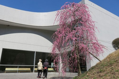 【近つ飛鳥博物館】2
