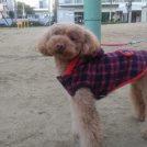 ななちゃん、第15回あったかまち祭りin北大江公園レポート