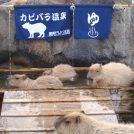 【那須町】猫のショーや温泉に入るカピバラに癒される「那須どうぶつ王国」