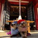 【初詣】「愛犬と一緒の年始のご祈祷」を詳細レポート♪