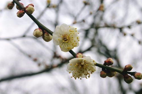 大阪市立大学(春日野)