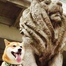 柴犬虎太郎でんがな日記☆41