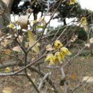 季節ごとの花が楽しめる「千葉市都市緑化植物園」@千葉東インター