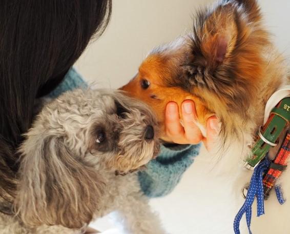 年末年始家族が増えました!保護犬レオくん