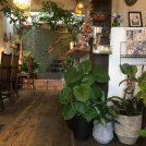 緑あふれる癒しのカフェ・王子公園「ライフスタイルショップ ソエル」