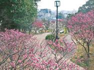 【観梅スポット】春告げる梅の香