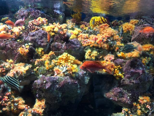 えのすい サンゴ礁