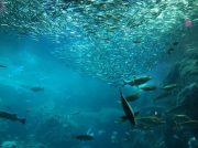 新江ノ島水族館の年パスは今が買い時!