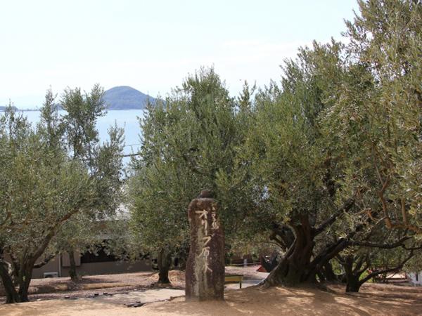 190206_olive_genboku1