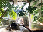 ペットと末永く快適に暮らしたい ペット可物件選びのコツ