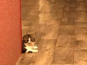 カワイイ癒やしの空間 猫カフェ Puchi Marry