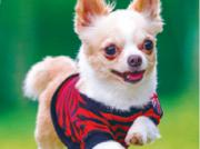 元気いっぱいに走る愛犬をプロが撮影 大切な思い出を写真に