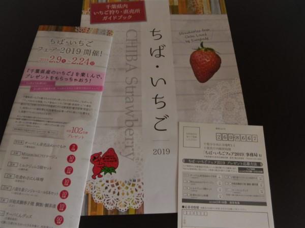 2019ichigo11