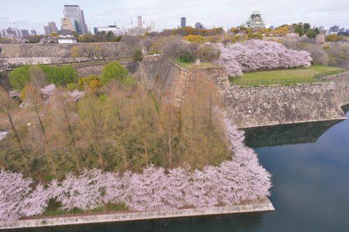 180324桜ガイド_城浪_大阪城公園
