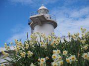 【笠岡】岡山県最南端の島、六島は水仙が咲き乱れる島だった