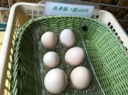 烏骨鶏の卵にびっくり!@長津田