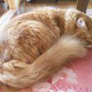 【2/2New Open】猫好きさん集まれ~!自宅開放型ネコカフェ「そらのしっぽ」@姶良