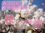 春は目前!中央線沿線の桜スポット名鑑2019