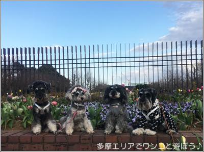 国営 昭和記念公園の「梅」