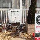 【小平】ワンコ連れでハンバーグランチ♪「ステーキハウス松木 小平店」
