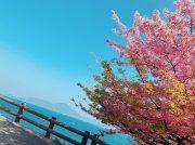 王道から穴場まで!愛媛のお花見スポット