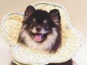 ペットのストレスを軽減できる布製エリザベスカラー
