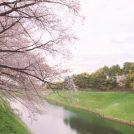 【千鳥ヶ淵の桜】満開!東京に平成最後の春が来た!!桜のトンネルを歩きませんか