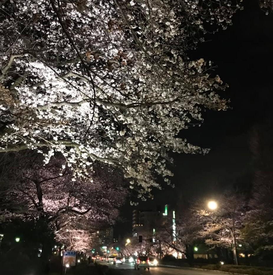くにたち桜ライトアップ2019_7 (2)