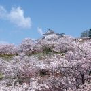 【岡山県下桜ガイド2019】さくら前線北上 ワクワクおでかけ日和