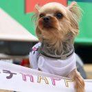 【3COINS】ペット用防災グッズ☆イベントやピクニックにも活用しよう