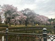 【宇都宮】子ども連れにもぴったり! 今は桜も楽しめる「栃木県中央公園」