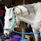 優しい馬や犬猫に癒されちゃう♪ライディングクラブ・フォーレスト@東温市