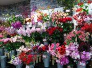 花をお手頃価格で♪高槻センター街「お花のディスカウントショップ パレット」