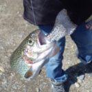【鹿沼】たった100円で釣りができる!釣って食べて楽しめる古戸中養魚場