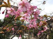 【仙台駅東口】お花見スポット2019♪&12時半で売切れランチ!