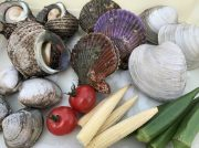 牡蠣、サザエ、蛤など海鮮BBQが食べ放題!名古屋城金シャチ横丁にビアガーデンが早くもオープン
