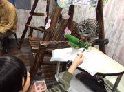 【池袋】子連れにもおすすめのカフェ「あうるぱーく」でフクロウと遊ぼう!